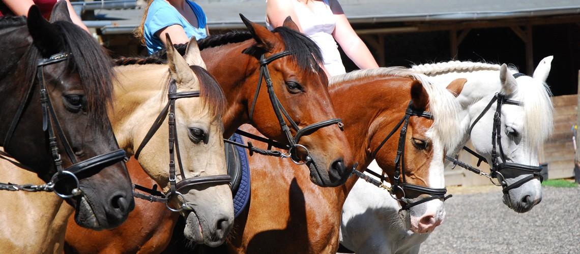 Schulungspferde