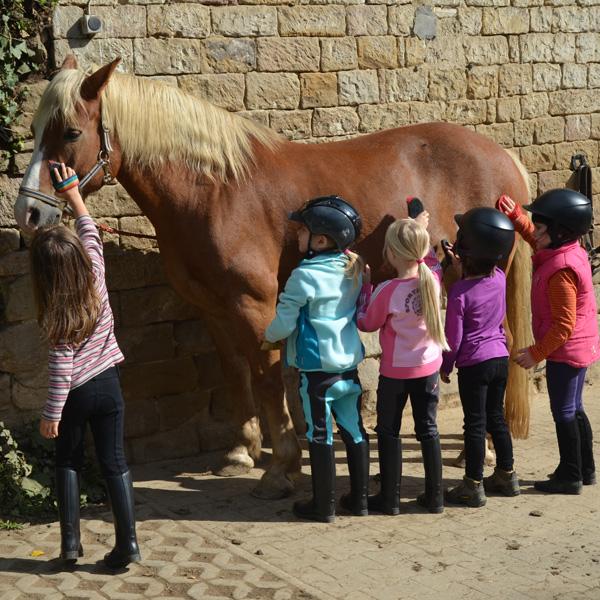 Reitausbildung für Anfänger und Kinder